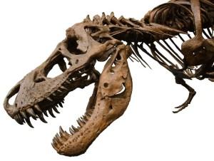 794px-Dinosaur-1343CreativeCommons