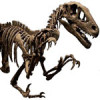 Utahraptor,Dinosaurs, Dinosaur Expeditions, Dinolands, Prehistoric Life, Life, Walking with Dinosaurs, palaeontology, paleontology, fossils, fossil digs, dinodigs, dinosaur digs, ancient life, Mesozoic, Extinction, dinokids, Dinoman, Archaeology, Archeology,Geological Time Line, fossilised bones, skeletons, prehistoric