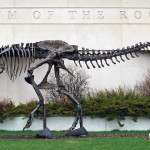 Museum of the Rockies, Dinosaurs, Dinosaur Expeditions, Dinolands, Prehistoric Life, Life, Walking with Dinosaurs, palaeontology, paleontology, fossils, fossil digs, dinodigs, dinosaur digs, ancient life, Mesozoic, Extinction, dinokids, Dinoman, Archaeology, Archeology,Geological Time Line