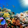 amazing-coral-reefs-6