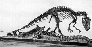Dinosaurs, Dinosaur Expeditions, Dinolands, Prehistoric Life, Life, Walking with Dinosaurs, palaeontology, paleontology, fossils, fossil digs, dinodigs, dinosaur digs, ancient life, Mesozoic, Extinction, dinokids, Dinoman, Archaeology, Archeology,Geological Time Line, fossilised bones, skeletons, prehistoric, Allosaurus, Cope and Marsh, The Bone Wars