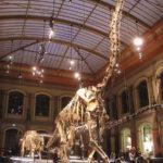 Dinosaurs, Dinosaur Expeditions, Dinolands, Prehistoric Life, Life, Walking with Dinosaurs, palaeontology, paleontology, fossils, fossil digs, dinodigs, dinosaur digs, ancient life, Mesozoic, Extinction, dinokids, Dinoman, Archaeology, Archeology,Geological Time Line, fossilised bones, skeletons, prehistoric, fossil bones, bones, old bones, ancient bones, Dinosaur Emporium, Dinosaurs for sale, Dinosaur Shop, Dinosaur Store, Marmaduke the T Rex, Gerald Allan Davie, The DinoZone, DinoZone, Dinoman, Giraffatitan