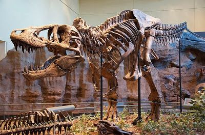 Dinosaurs, Dinosaur Expeditions, Dinolands, Prehistoric Life, Life, Walking with Dinosaurs, palaeontology, paleontology, fossils, fossil digs, dinodigs, dinosaur digs, ancient life, Mesozoic, Extinction, dinokids, Dinoman, Archaeology, Archeology,Geological Time Line, fossilised bones, skeletons, prehistoric, fossil bones, bones, old bones, ancient bones, Dinosaur Emporium, Dinosaurs for sale, Dinosaur Shop, Dinosaur Store, Marmaduke the T Rex, Carnegie Museum of Natural History, Dinoman, Gerald Allan Davie