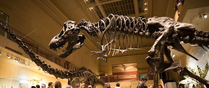 GeoZone, DinoZone, Gerald Allan Davie, Dinoman, dinosaurs, pterosaurs, ichthyosaurs, plesiosaurs, Mesozoic, Walking with Dinosaurs, Triassic, Jurassic, Cretaceous, Extinction, Trilobites, Cambrian Extinction, Cambrian, Permian, Dicynodonts, Trilobites, Cretaceous Tertiary, Cretaceous Paleogene, Jurassic Park, Jurassic World, Museums, Paleontology, Palaeontology, bones, archaeology, Smithsonian
