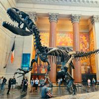 GeoZone, DinoZone, Gerald Allan Davie, Dinoman, dinosaurs, pterosaurs, ichthyosaurs, plesiosaurs, Mesozoic, Walking with Dinosaurs, Triassic, Jurassic, Cretaceous, Extinction, Trilobites, Cambrian Extinction, Cambrian, Permian, Dicynodonts, Trilobites, Cretaceous Tertiary, Cretaceous Paleogene, Jurassic Park, Jurassic World, Museums, Paleontology, Palaeontology, bones, archaeology, American Museum of Natural History, AMNH