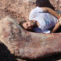 GeoZone, DinoZone, Gerald Allan Davie, Dinoman, dinosaurs, pterosaurs, ichthyosaurs, plesiosaurs, Mesozoic, Walking with Dinosaurs, Triassic, Jurassic, Cretaceous, Extinction, Trilobites, Cambrian Extinction, Cambrian, Permian, Dicynodonts, Trilobites, Cretaceous Tertiary, Cretaceous Paleogene, Jurassic Park, Jurassic World, Museums, Paleontology, Palaeontology, bones, archaeology, biggest dinosaur ever,