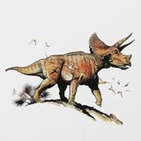 StoutTriceratopsGeoZone, DinoZone, Gerald Allan Davie, Dinoman, dinosaurs, pterosaurs, ichthyosaurs, plesiosaurs, Mesozoic, Walking with Dinosaurs, Triassic, Jurassic, Cretaceous, Extinction, Trilobites, Cambrian Extinction, Cambrian, Permian, Dicynodonts, Trilobites, Cretaceous Tertiary, Cretaceous Paleogene, Jurassic Park, Jurassic World, Museums, Paleontology, Palaeontology, bones, archaeology, paleoartists, palaeoartists, William Stout