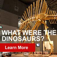 GeoZone, DinoZone, Gerald Allan Davie, Dinoman, dinosaurs, pterosaurs, ichthyosaurs, plesiosaurs, Mesozoic, Walking with Dinosaurs, Triassic, Jurassic, Cretaceous, Extinction, Trilobites, Cambrian Extinction, Cambrian, Permian, Dicynodonts, Trilobites, Cretaceous Tertiary, Cretaceous Paleogene, Jurassic Park, Jurassic World, Museums, Paleontology, Palaeontology, bones, archaeology,