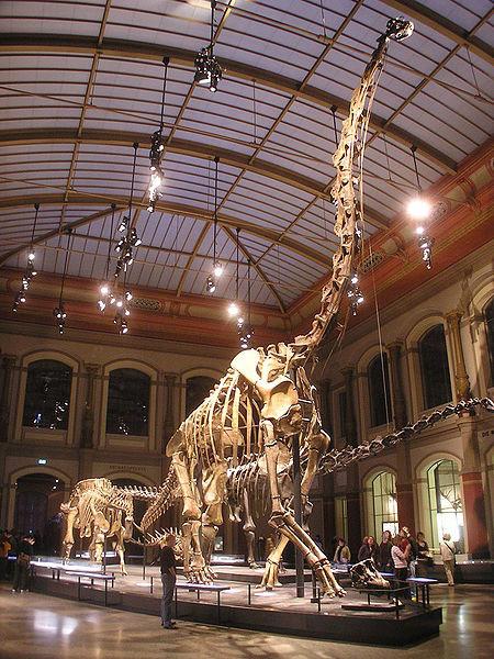450px-Naturkundemuseum_Gira