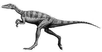 GeoZone, DinoZone, Gerald Allan Davie, Dinoman, dinosaurs, pterosaurs, ichthyosaurs, plesiosaurs, Mesozoic, Walking with Dinosaurs, Triassic, Jurassic, Cretaceous, Extinction, Trilobites, Cambrian Extinction, Cambrian, Permian, Dicynodonts, Trilobites, Cretaceous Tertiary, Cretaceous Paleogene, Jurassic Park, Jurassic World, Museums, Paleontology, Palaeontology, bones, archaeology, Eoraptor